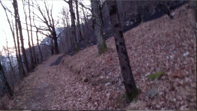 Forestfire Mesocco, blackened ground