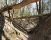 Wolfsschlucht at Pritzenhagen/Oberbarnim, Brandenburg. traces of erosion from the first half of the 14th Century(Foto: Lienhard Schulz, Lizenz: CC-BY-SA, Quelle: Wikimedia Commons)