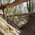 Die Wolfsschlucht bei Pritzenhagen/Oberbarnim, Brandenburg. Das Kerbtal ist wesentlich durch einige wenige Erosionsereignisse in der ersten Hälfte des 14. Jahrhunderts geprägt. (Foto: Lienhard Schulz, Lizenz: CC-BY-SA, Quelle: Wikimedia Commons)
