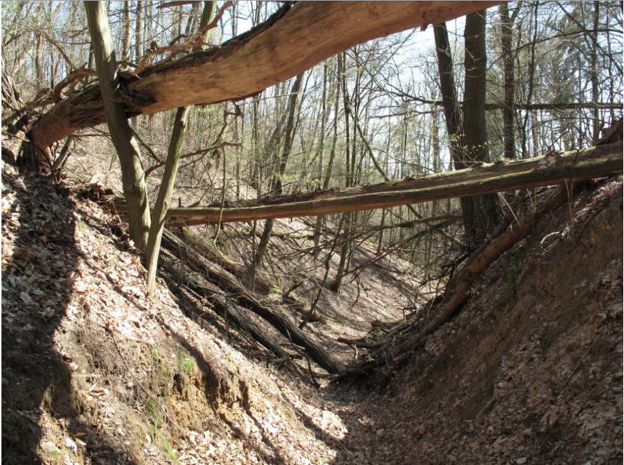 Wolfsschlucht at Pritzenhagen/Oberbarnim, Brandenburg. traces of erosion from the first half of the 14th Century(Foto: Lienhard Schulz, Lizenz: CC-BY-SA, Quelle: Wikimedia Commons)