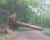 Switzerland Ash-tree die off 2017